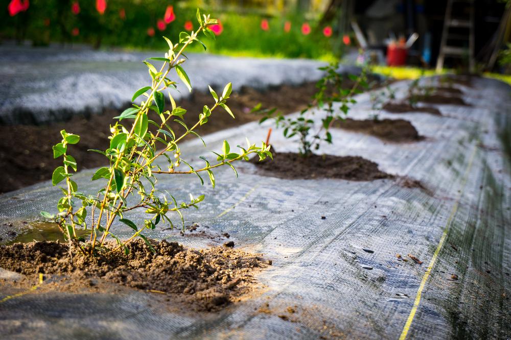 First Murta Planting.jpg