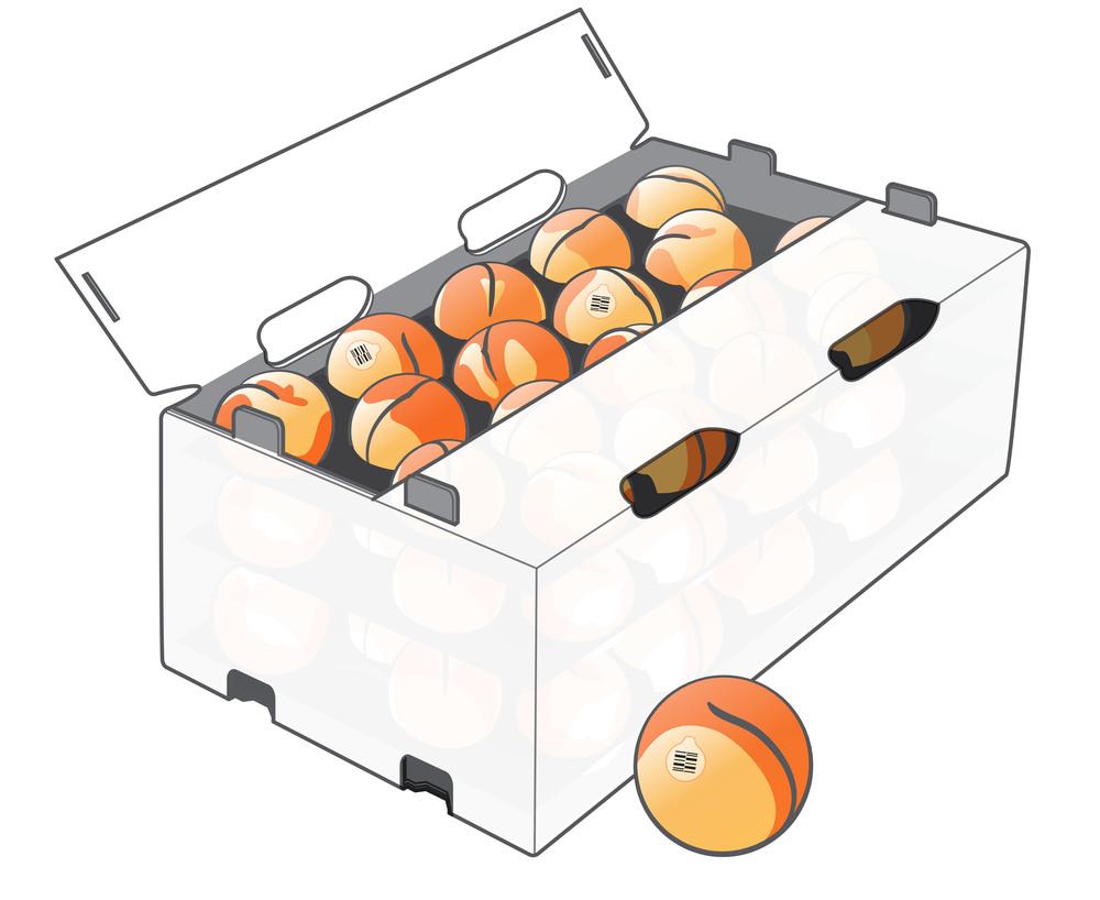 Peach Pantapak