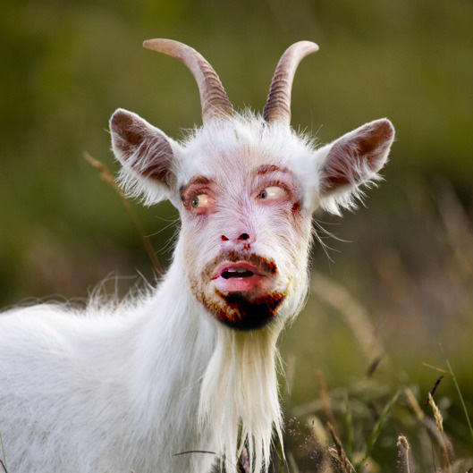 dangoat.jpg