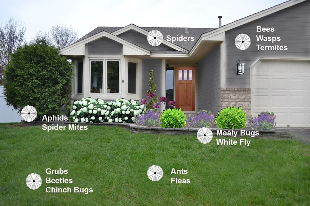 pest control.jpg