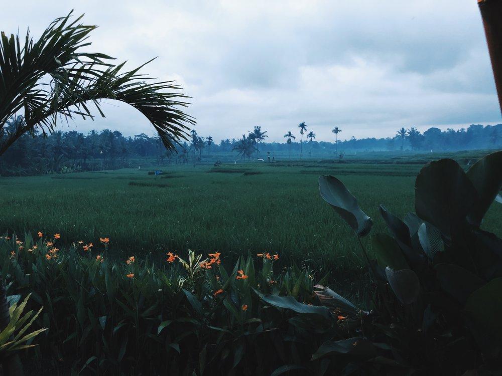 Padi Eco Villas in Payangan