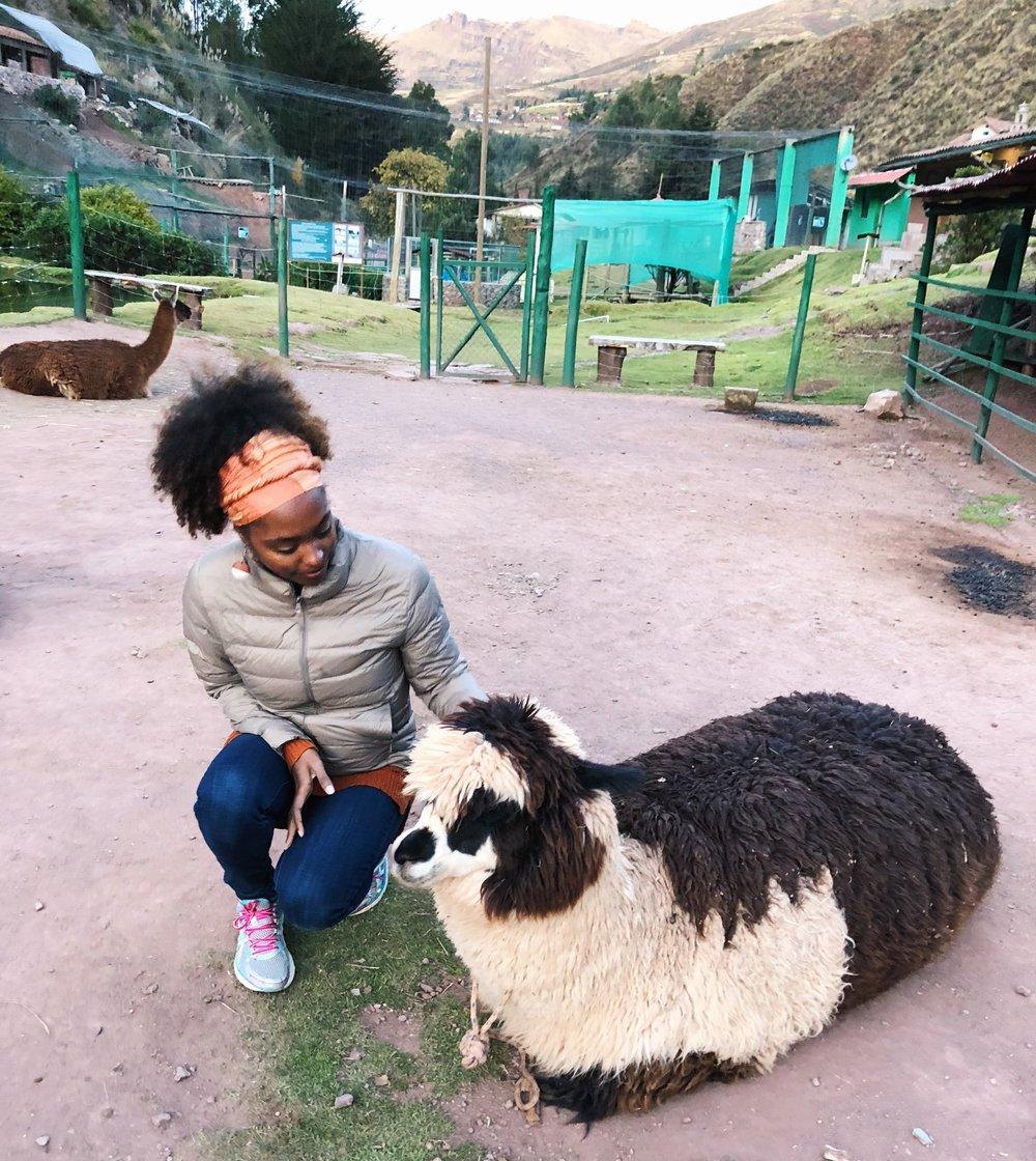 7 Day Peru Itinerary-Animal Sanctuary