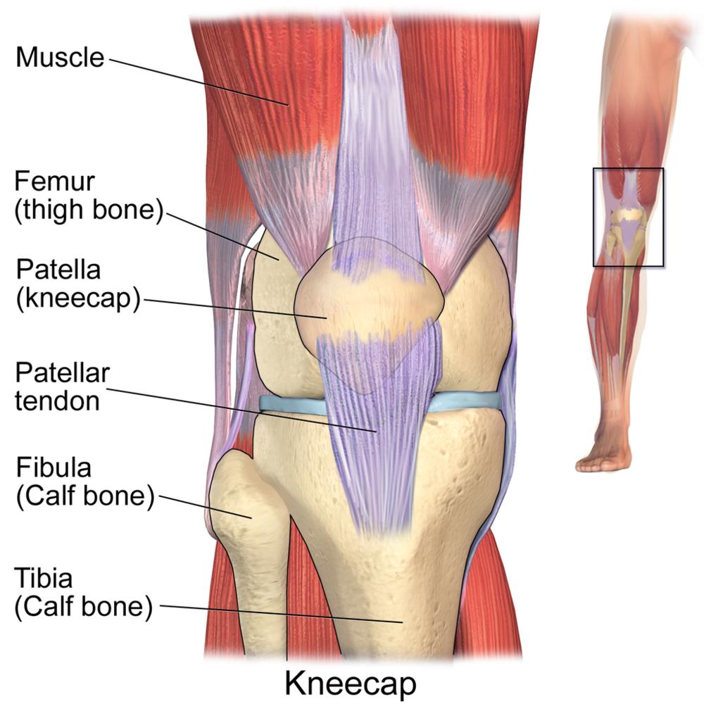 Knee Pain/ PFP — City Coast PhysioKnee Pain/ PFP