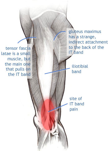 image credit: www.painscience.com