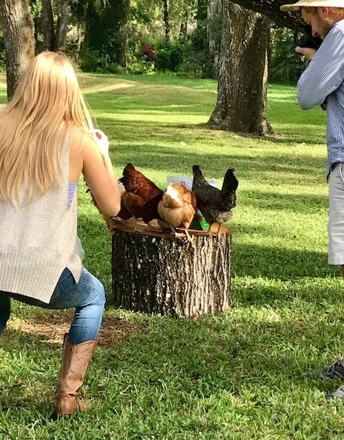 grubbly farms chickens.jpg