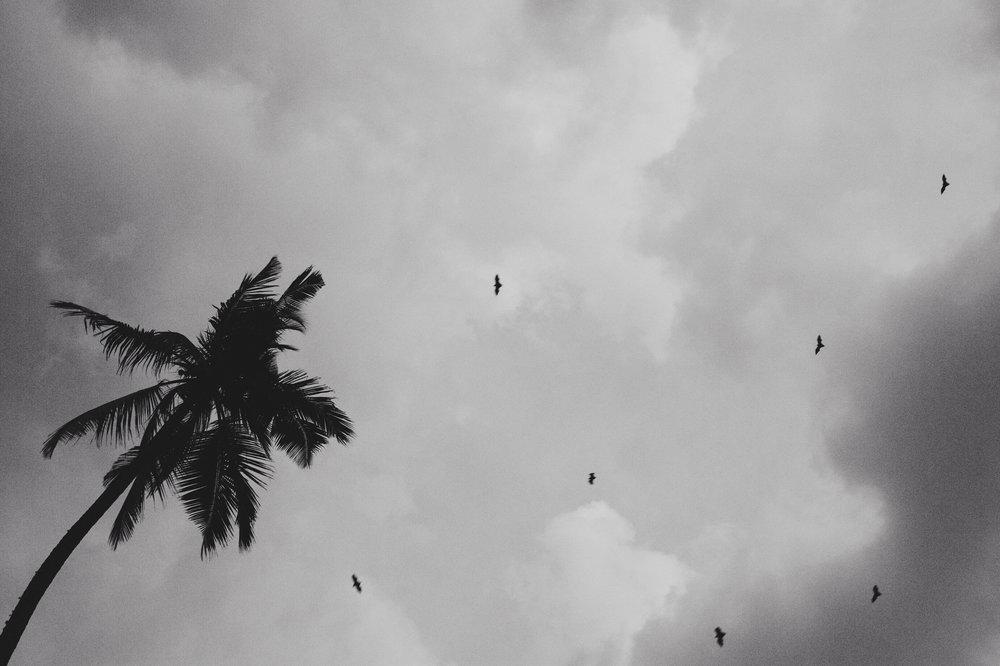 srilankabats-1.jpg
