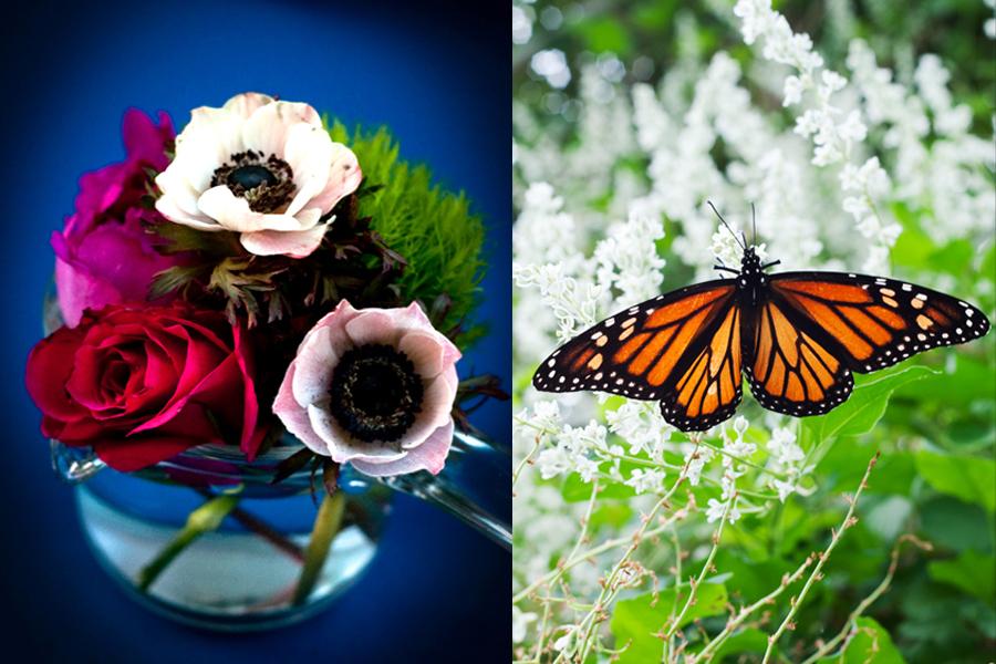 18_butterfly.jpg