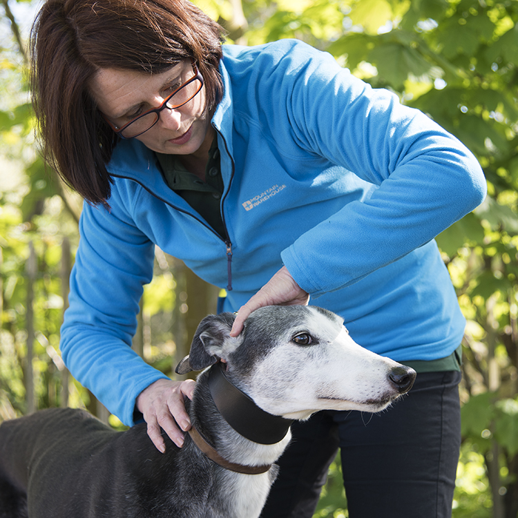Canine Osteopath with greyhound