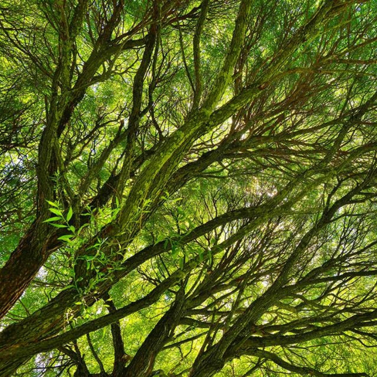vert woods profile pic.jpg