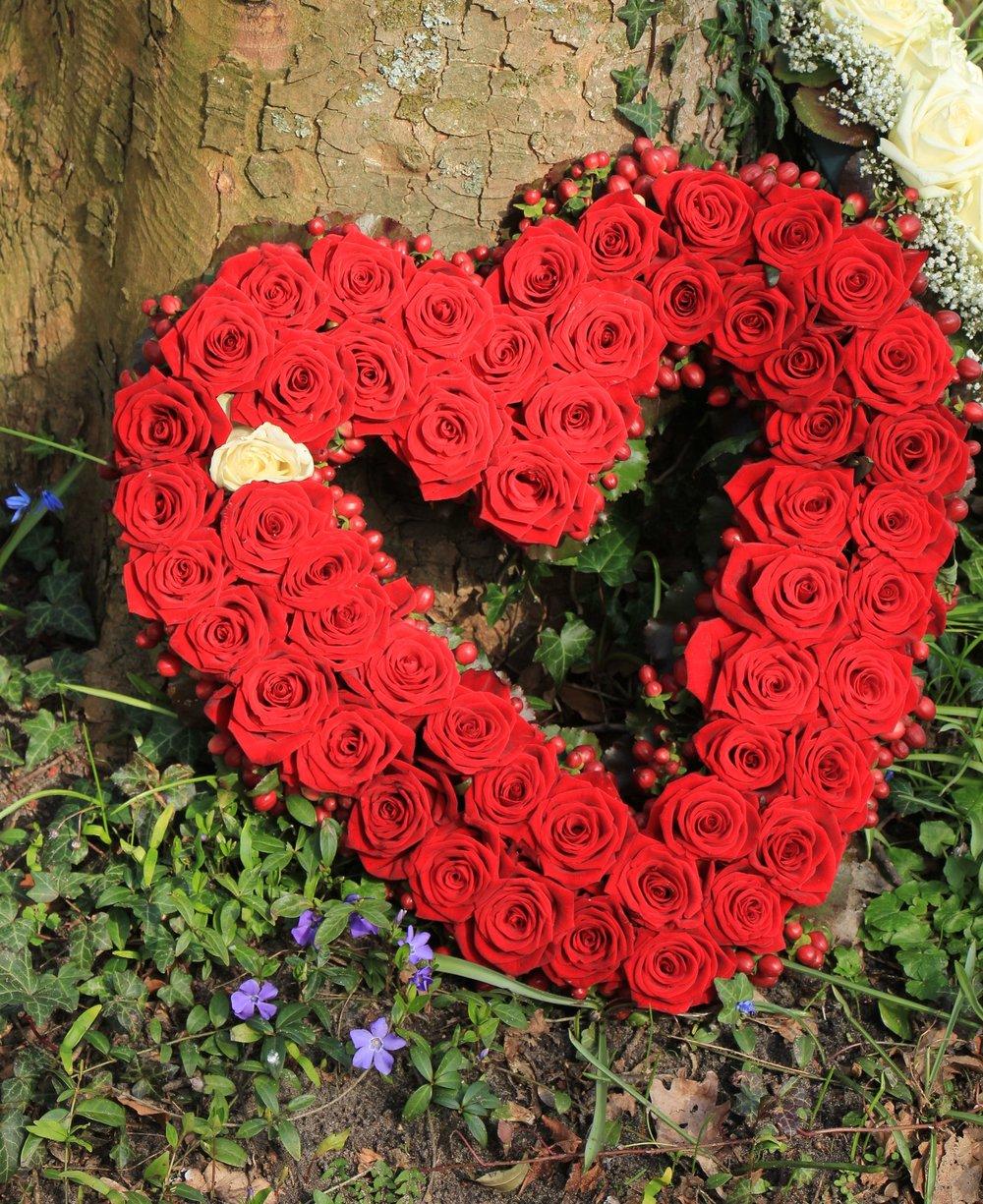 Heart red roses.jpg