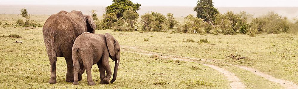 elephantsIT7A9922.jpg