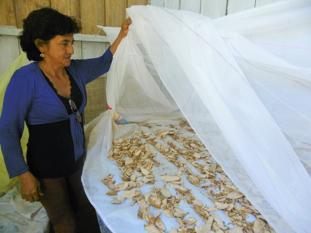 Séchage artisanal du Jergon sacha à Santa Rosa avec Rogelia del Castillo Mendoza - Crédit photo: Lina Faraj