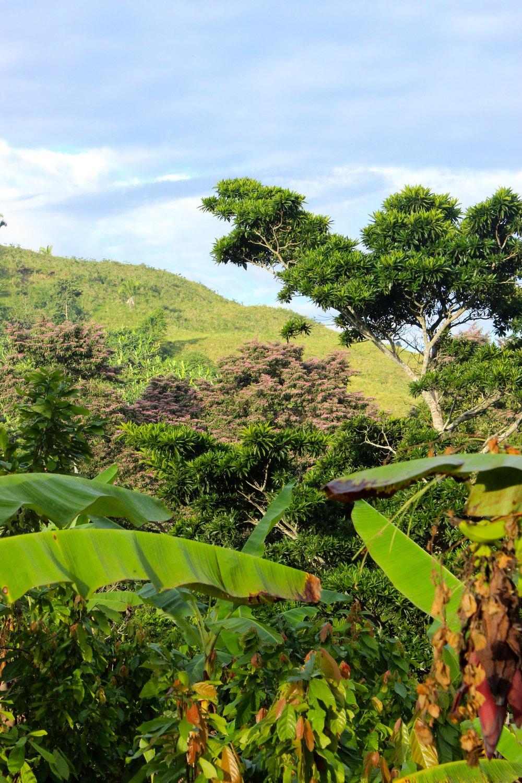 L'agroforesterie, clé de voûte d'une reforestation durable (et profitable!)