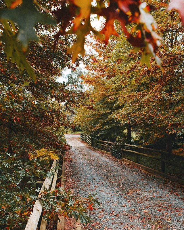Adelaide Hills turning on the Autumn tones. #adelaidephotographer #contentcreation 📷@heyandy.studio
