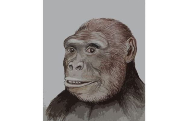 - A graphic reconstruction of the face of Graecopithecus freybergi, the first pre-human whose fossils have been found in Bulgaria and Greece. Image: Asen Ignatov, National Museum of Natural History – Sofia