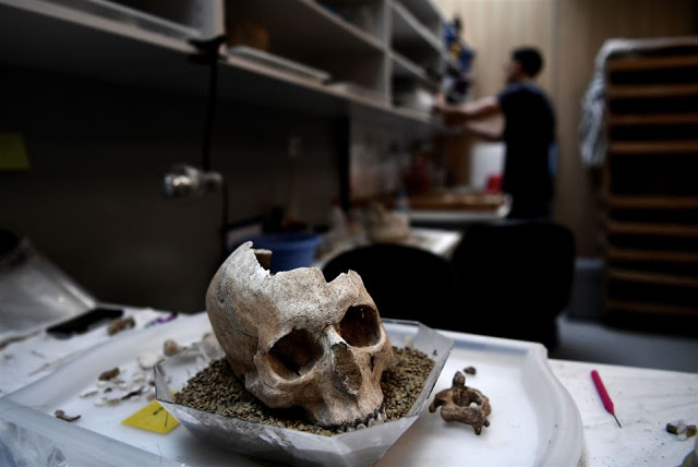 A photo taken on July 7, 2017 shows a human skull stored in a lab at the American School    of Archaeology in Athens [Credit: Aris Messinis/AFP]