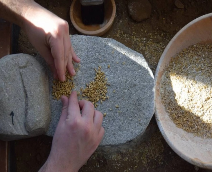 To learn more about the beer-making ways of the ancient Greeks, researchers ground malted barley ( Hordeum ) with the ERC PlantCult Project. Credit: Copyright Springer-Verlag GmbH Germany, part of Springer Nature 2017