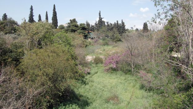 The river Ilisos emerges briefly in reed beds behind the Temple of Olympian Zeus