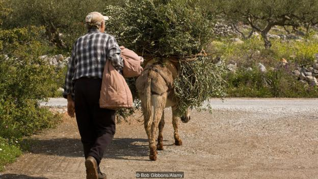 Maniots now devote their lives to more peaceful endeavours such as olive farming (Credit: Bob Gibbons/Alamy)