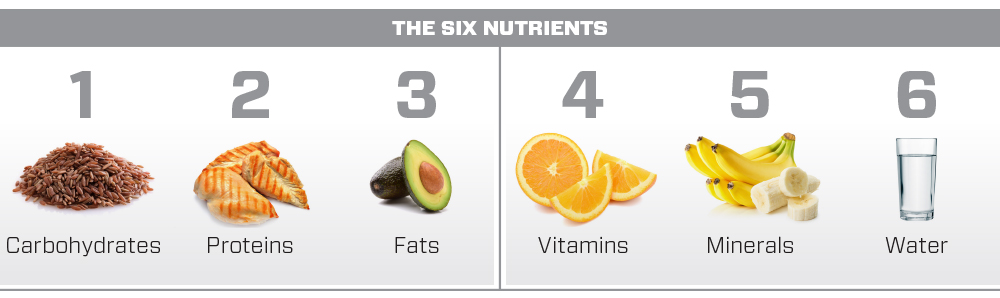 6-nutrients-1000-vs.jpg
