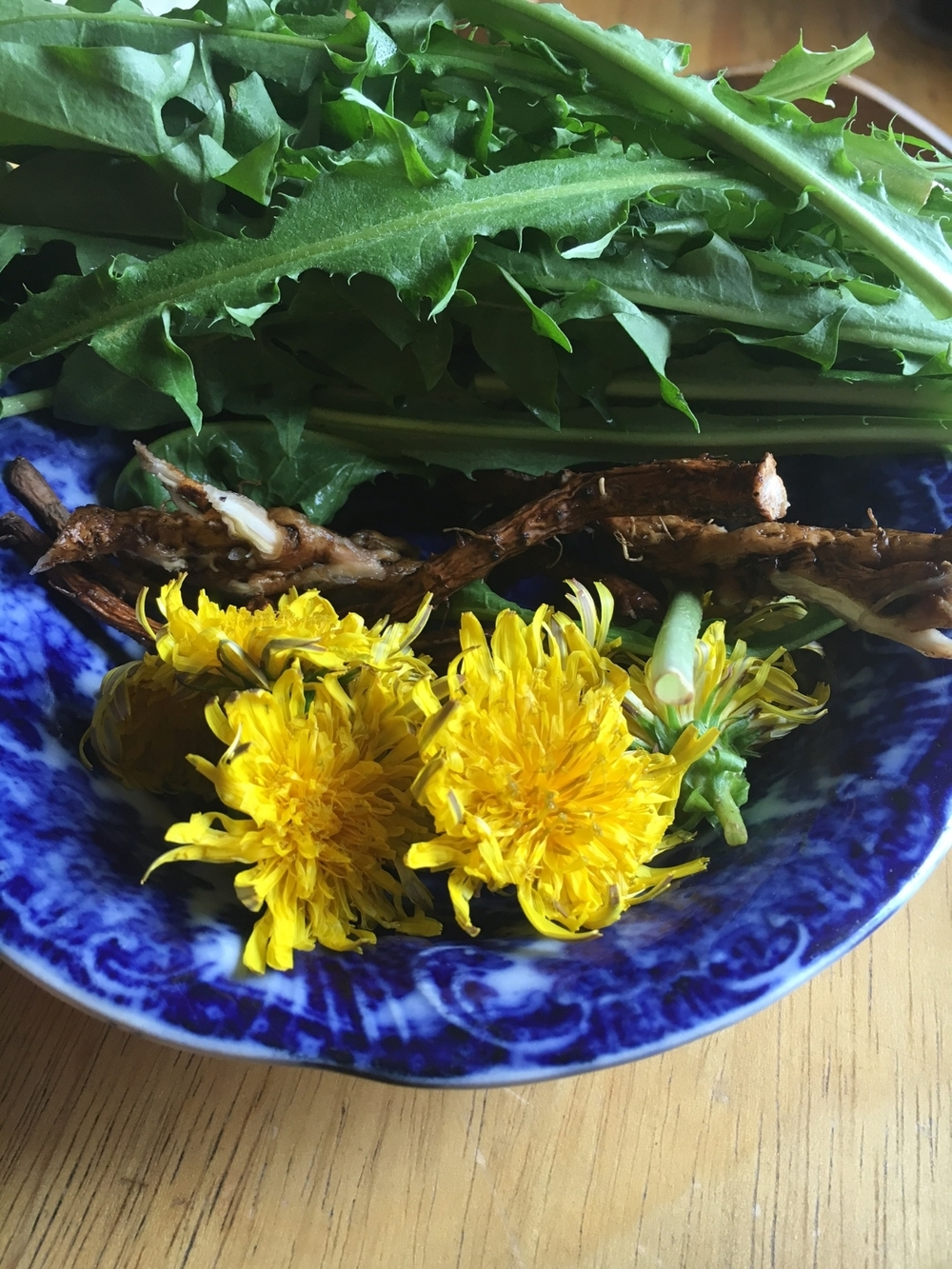 Dandelion leaves, root and flowers for a tincture.