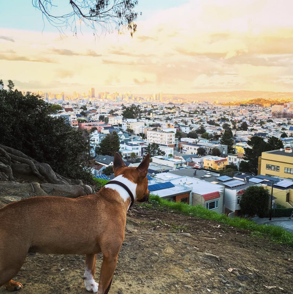 Tusker's view of San Francisco from Billy Goat Hill.