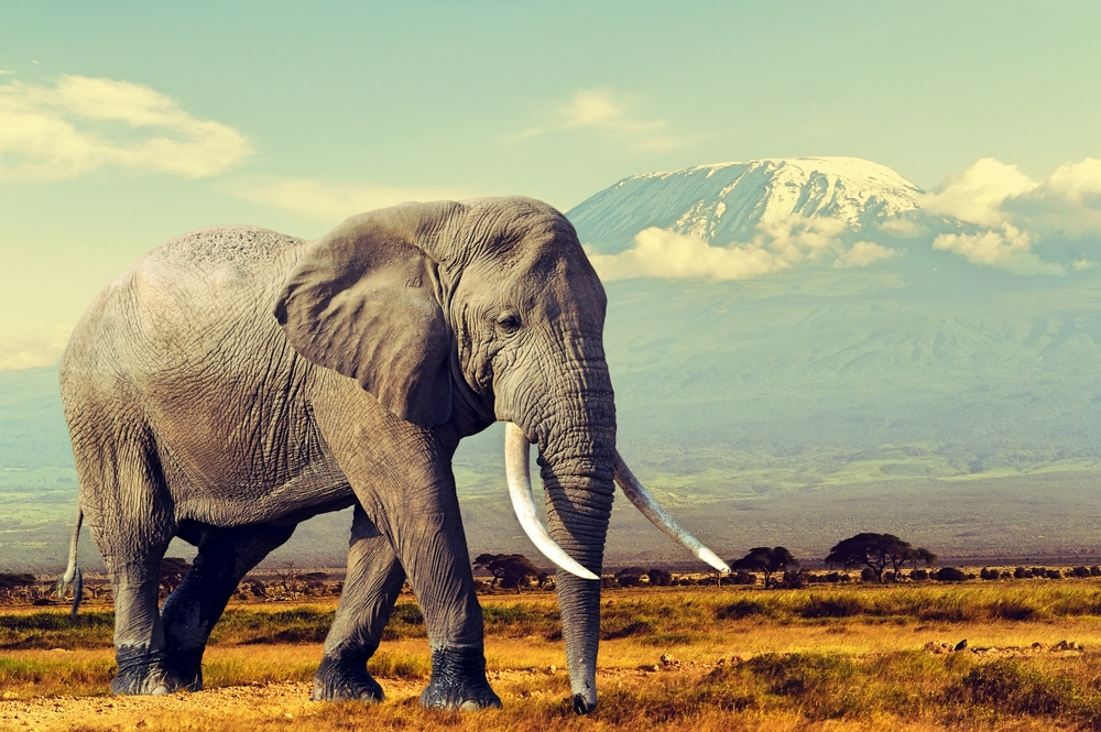 Elephant Conservation