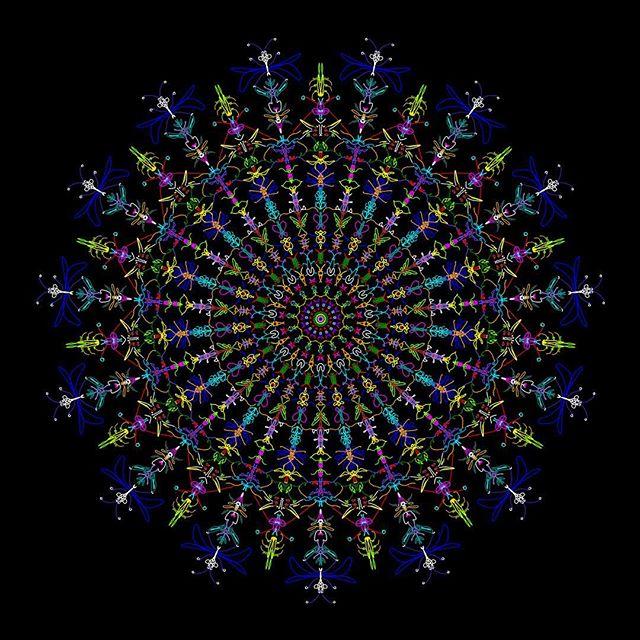 Insect Mandala #arttherapy #hanalokahi #hanalokahitherapy
