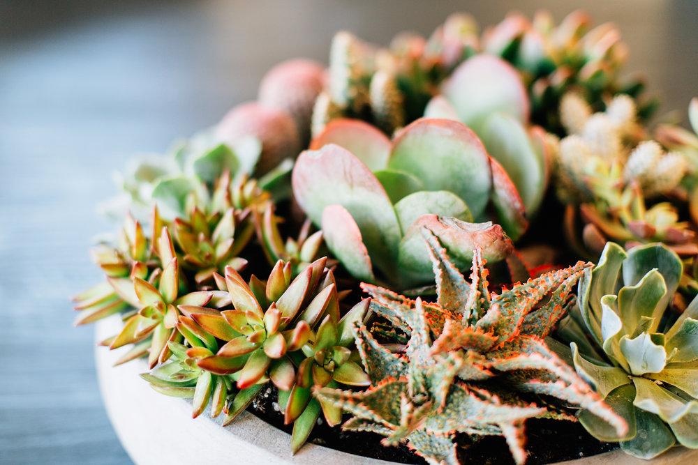 succulentpot3.jpg