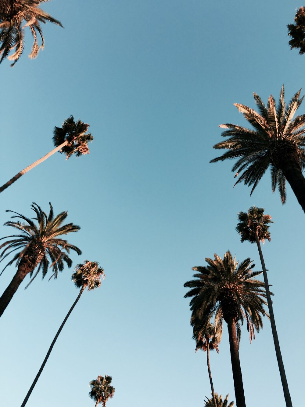 Beverly Hills and palms