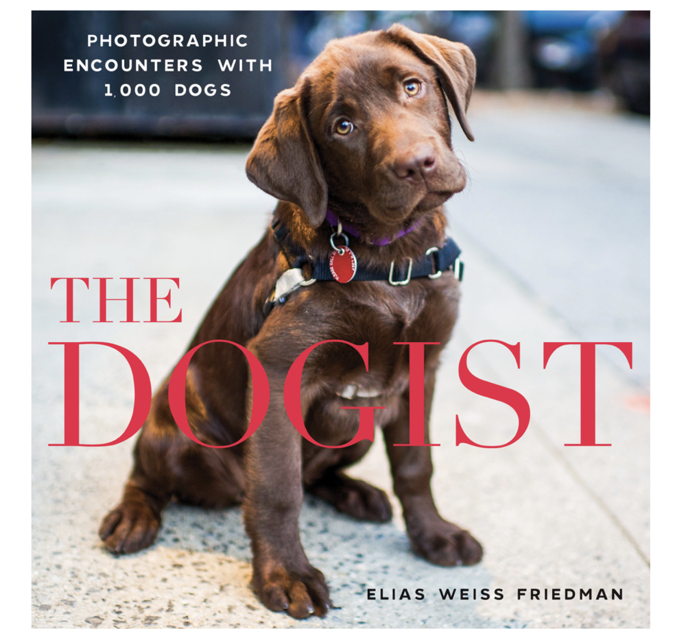 Coffee Table Book - If you haven't seen The Dogist on Instagram, I highly suggest it. The pictures are so entertaining, and this is a book version.