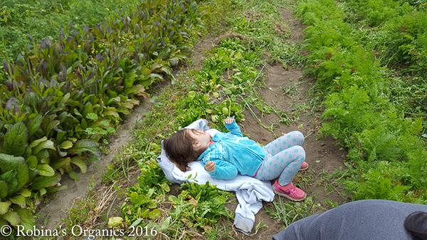 Nap time at Farm.jpg