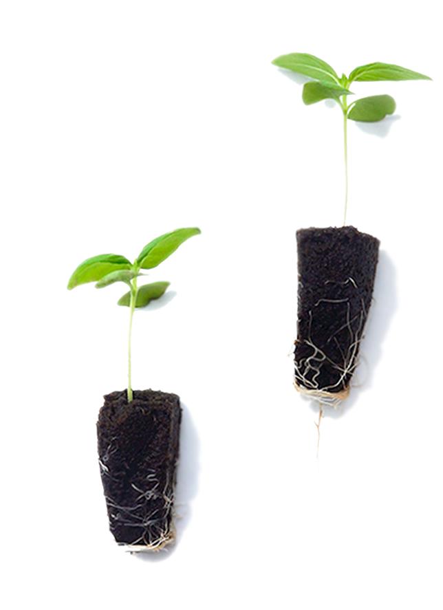 Seedlings-on-whitex1.png