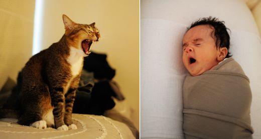 yawns