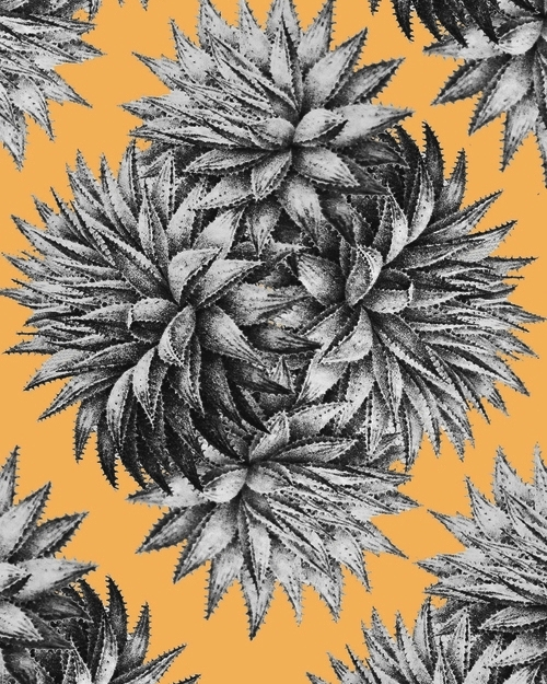 Aloeprint.jpg