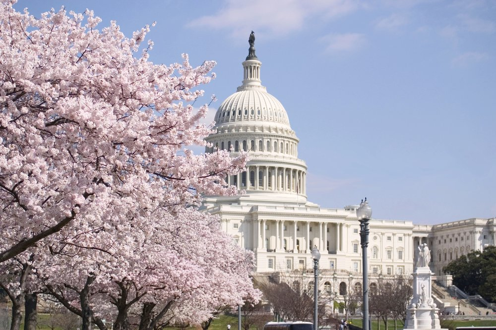 DC spring and capitol.jpg