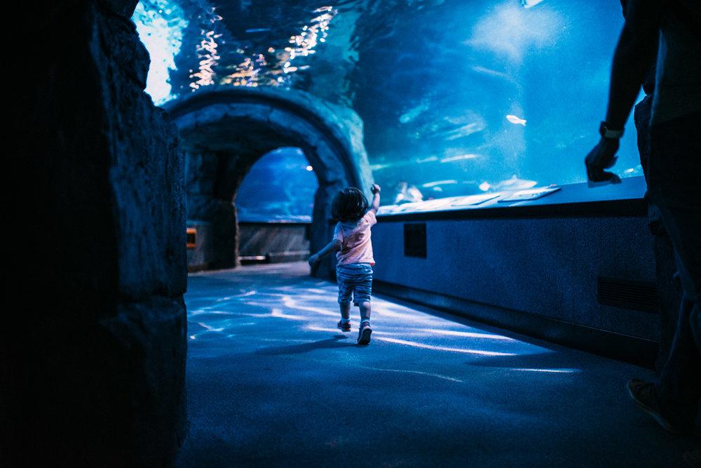 Lifestyle-Photographer-Columbus-Ohio-Newport-Aquarium-Erika-Venci-Photography