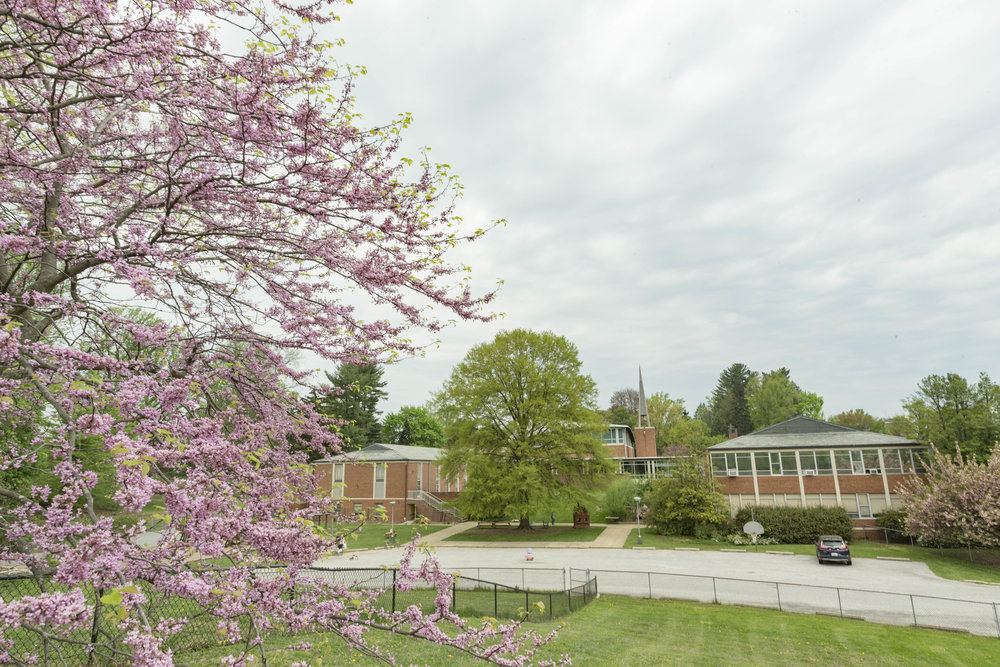 A VIEW OF THE OAK TREE IN THE MIDDLE OF THE NEW CAMPUS