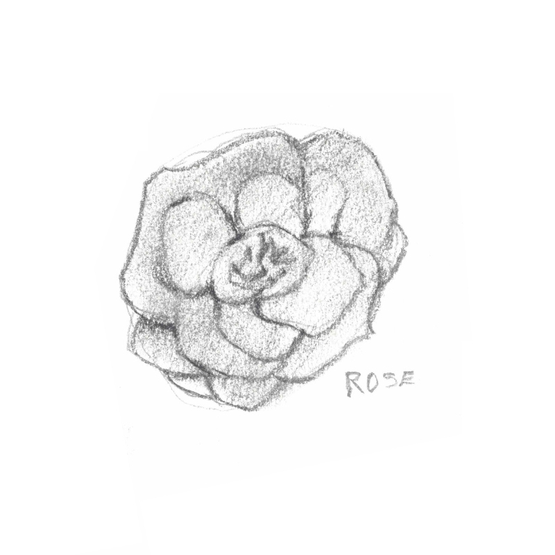 ROSE: Cell repairing, soothing, toning and rejuvenating to the skin thanks to its anti-inflammatory, antibacterial and hydrating properties.