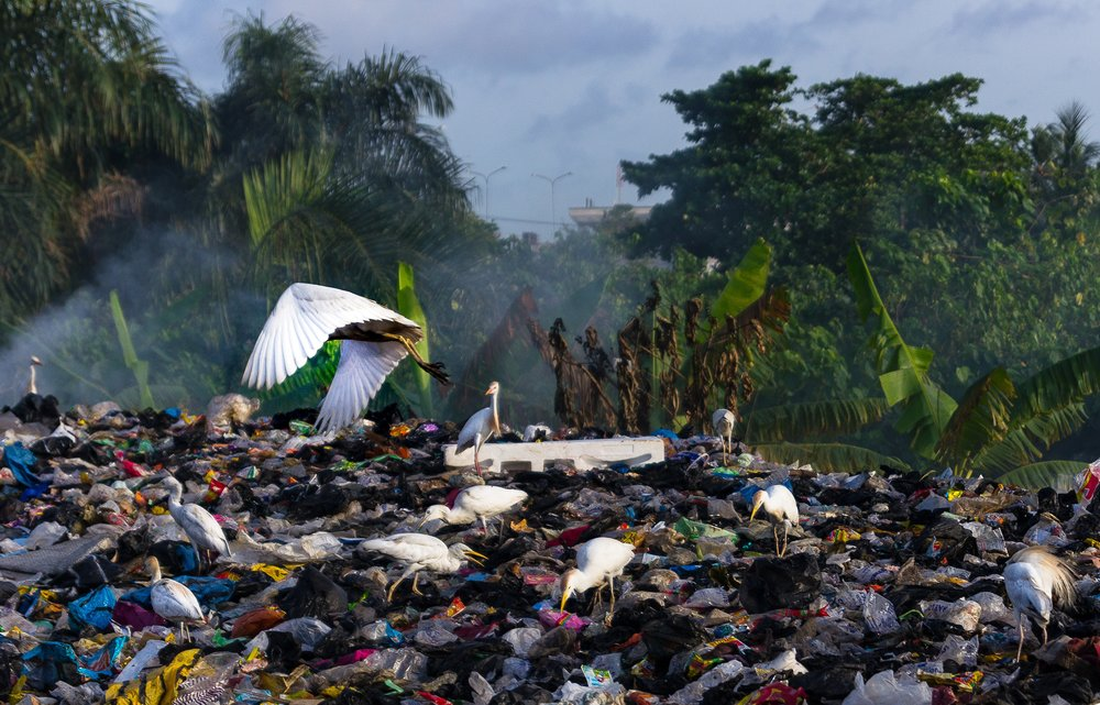 A landfill in Nigeria. The tropical setting makes it that much more awful to stomach.