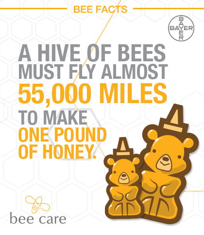 Bee_Infographic_Pin_003.jpg