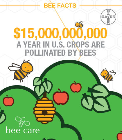 Bee_Infographic_Pin_005.jpg