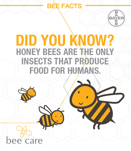Bee_Infographic_Pin_004.jpg