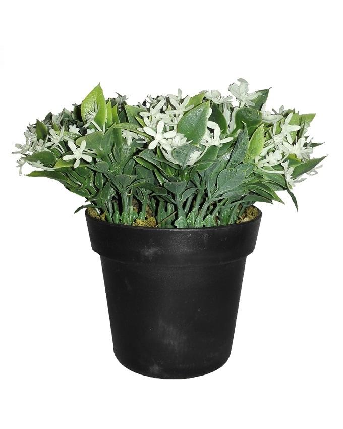 NEW    PLANTE PLANT IN PLASTIC POT - 14CM   N3,500