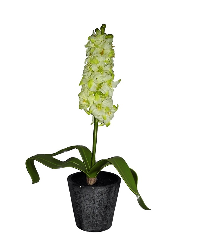 NEW    VINO PLANT IN PLASTIC POT 35CM - WHITE   N3,900