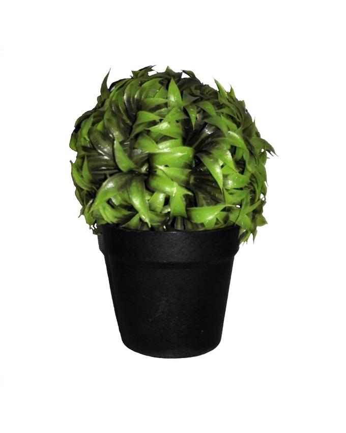 NEW    JANE PLANT IN BLACK POT - 17CM   N3,500