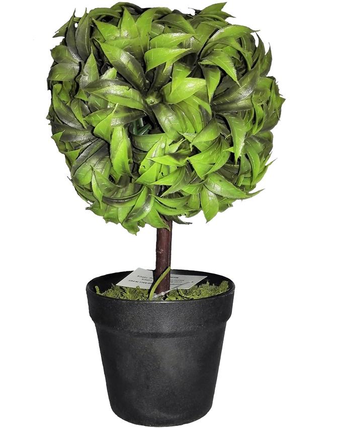 NEW    DORSET GREEN PLANT IN BLACK POT - 22CM   N3,500