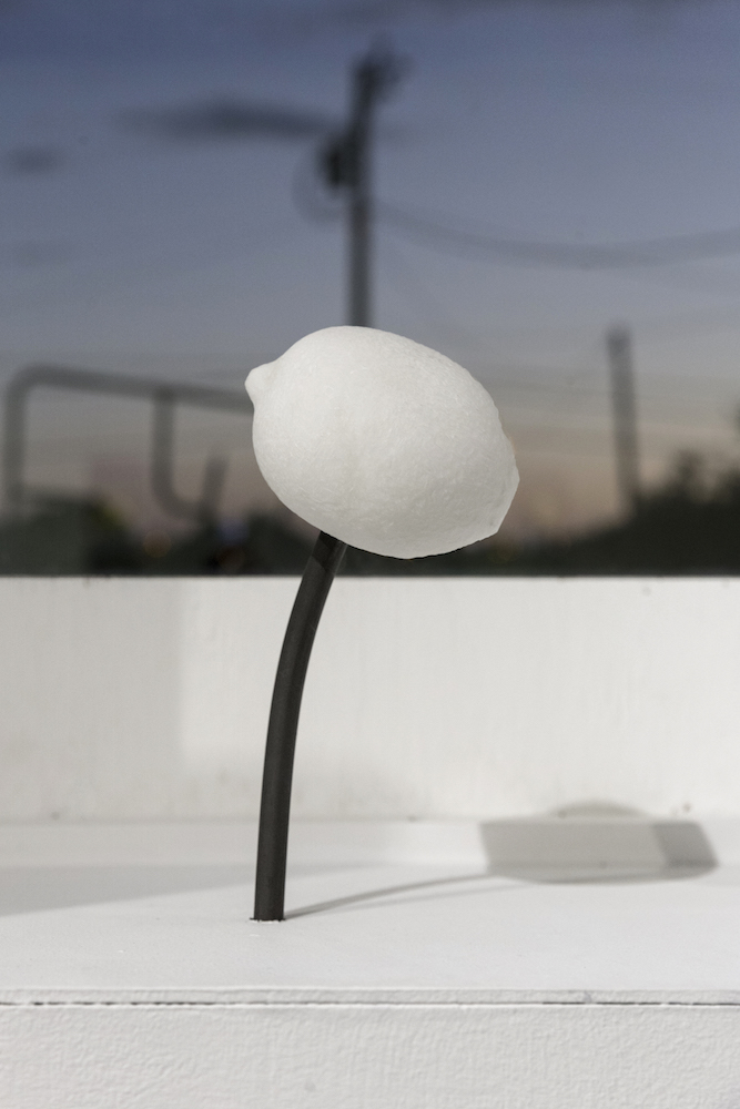 Emma Courtney Cook   Lemon in the Night   2018  alabaster and steel