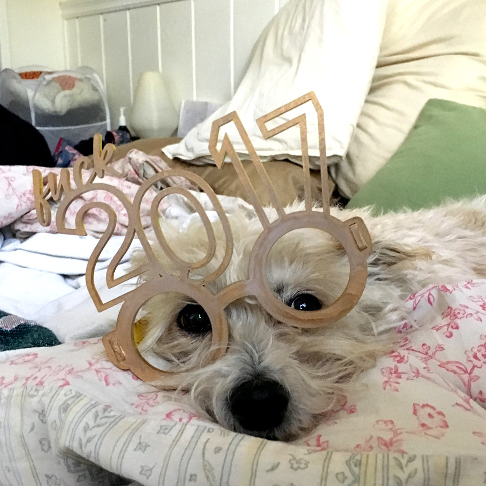 Bandit in Glasses.jpg