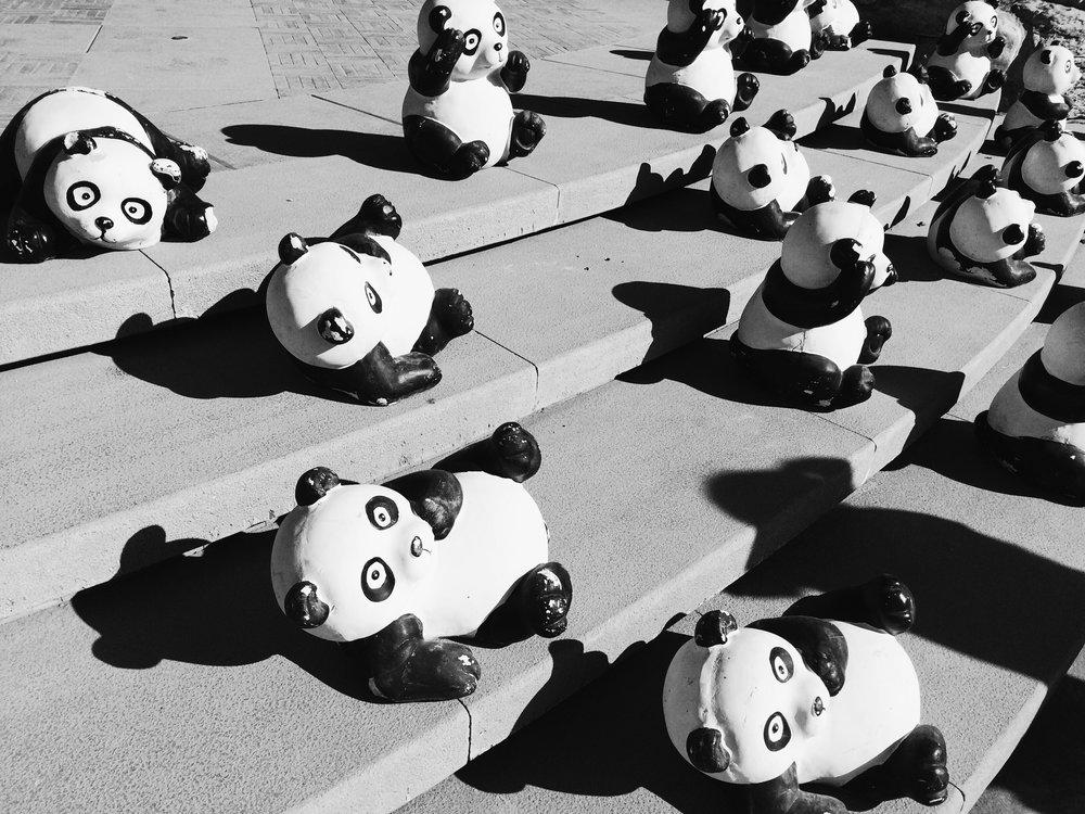 Google Panda -